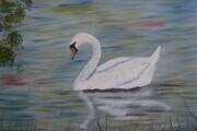 Swan on the Avon in Stratford 16x20