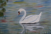 Swan on the Avon in Stratford 16x20