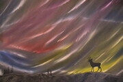 Northern Lights 24 x 36 oil wrapped canvas