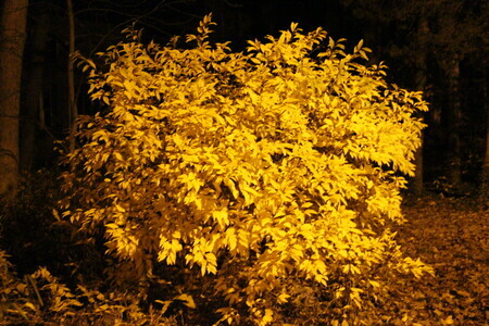 Fall leaves by street light