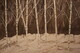 Sepia birch 24 x 6 oil$475
