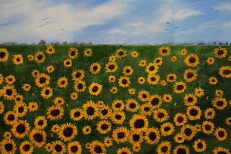 Sunflowers 24 x 36 on canvas,  putty knife $600      16x20 Print $100
