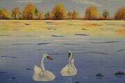 Swans in fall 16 x 20 $175